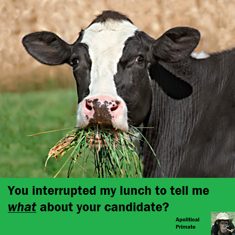 interrupted lunch bovine